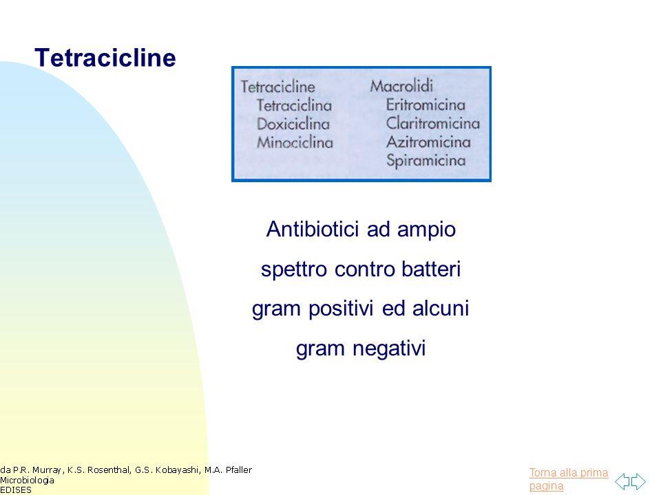 Torna alla prima pagina Tetracicline Antibiotici ad ampio spettro contro batteri gram positivi ed alcuni gram negativi