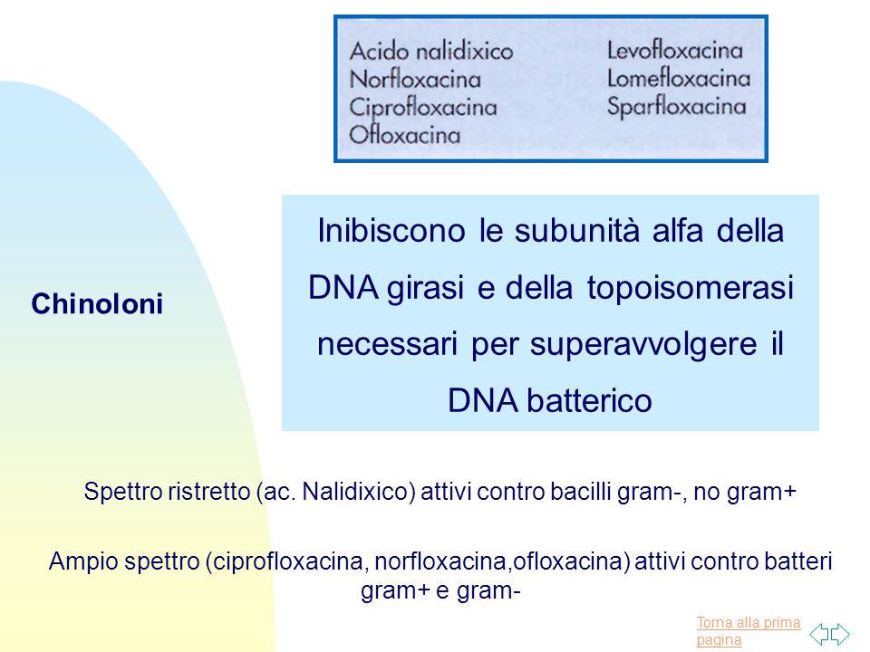 Torna alla prima pagina Chinoloni Inibiscono le subunità alfa della DNA girasi e della topoisomerasi necessari per superavvolgere il DNA batterico Spettro ristretto (ac.