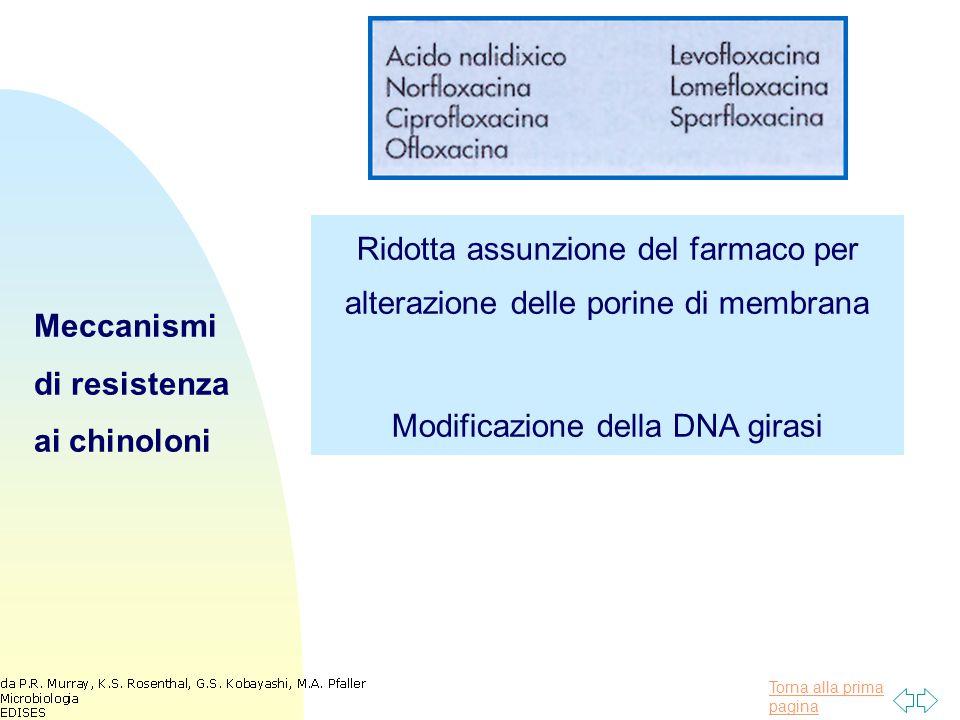 Torna alla prima pagina Meccanismi di resistenza ai chinoloni Ridotta assunzione del farmaco per alterazione delle porine di membrana Modificazione della DNA girasi