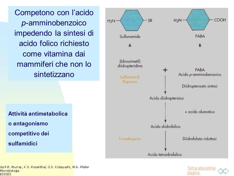 Torna alla prima pagina Attività antimetabolica o antagonismo competitivo dei sulfamidici Competono con l'acido p-amminobenzoico impedendo la sintesi di acido folico richiesto come vitamina dai mammiferi che non lo sintetizzano