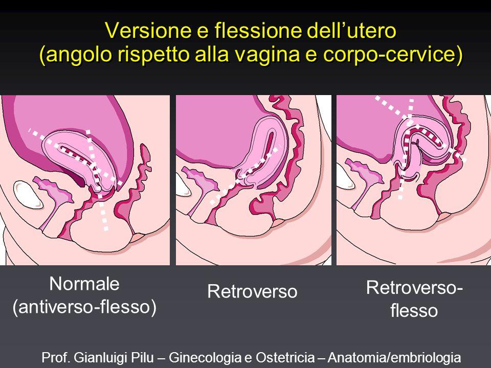 Prof. Gianluigi Pilu – Ginecologia e Ostetricia – Anatomia/embriologia Versione e flessione dell'utero (angolo rispetto alla vagina e corpo-cervice) N