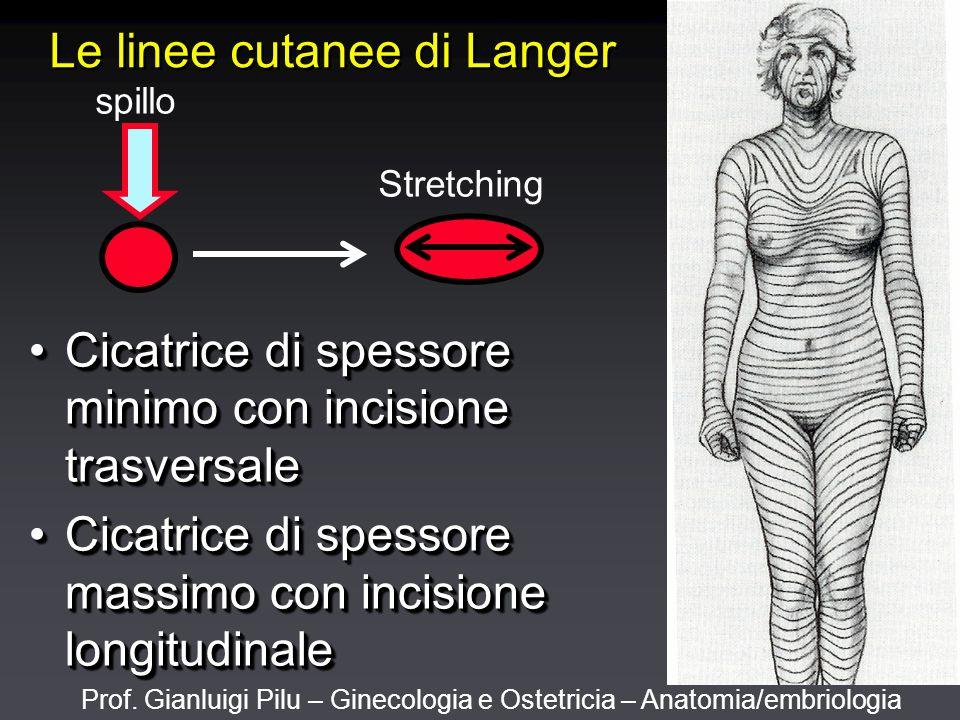 Prof. Gianluigi Pilu – Ginecologia e Ostetricia – Anatomia/embriologia Le linee cutanee di Langer Cicatrice di spessore minimo con incisione trasversa