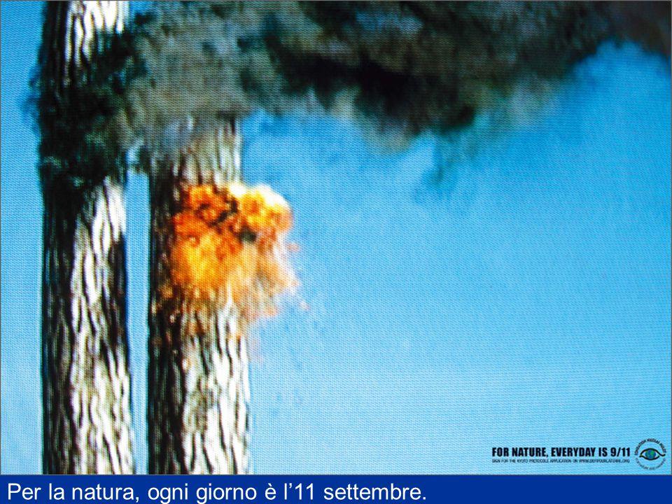 Per la natura, ogni giorno è l'11 settembre.