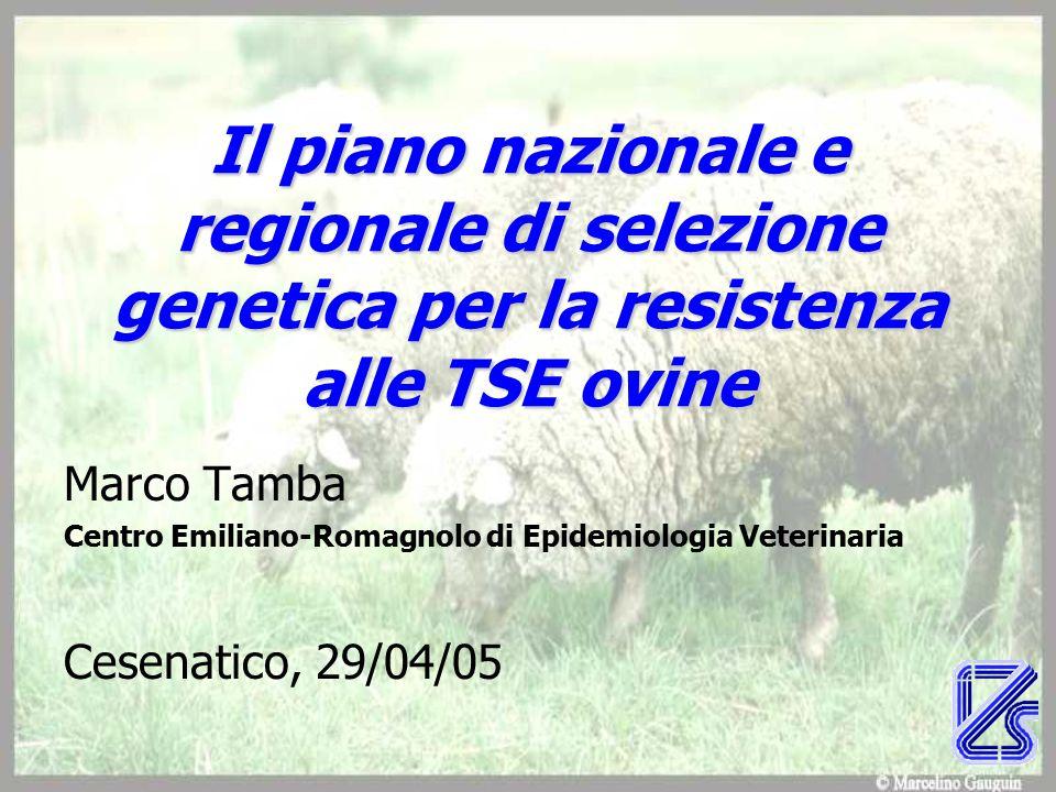 Il piano nazionale e regionale di selezione genetica per la resistenza alle TSE ovine Marco Tamba Centro Emiliano-Romagnolo di Epidemiologia Veterinaria Cesenatico, 29/04/05