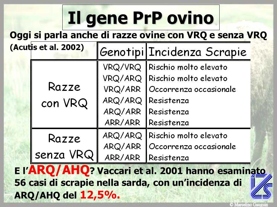 Il gene PrP ovino Oggi si parla anche di razze ovine con VRQ e senza VRQ (Acutis et al.