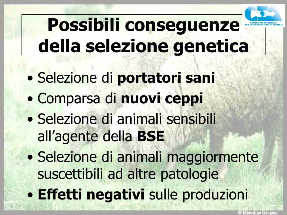 Possibili conseguenze della selezione genetica Selezione di portatori sani Comparsa di nuovi ceppi Selezione di animali sensibili all'agente della BSE Selezione di animali maggiormente suscettibili ad altre patologie Effetti negativi sulle produzioni