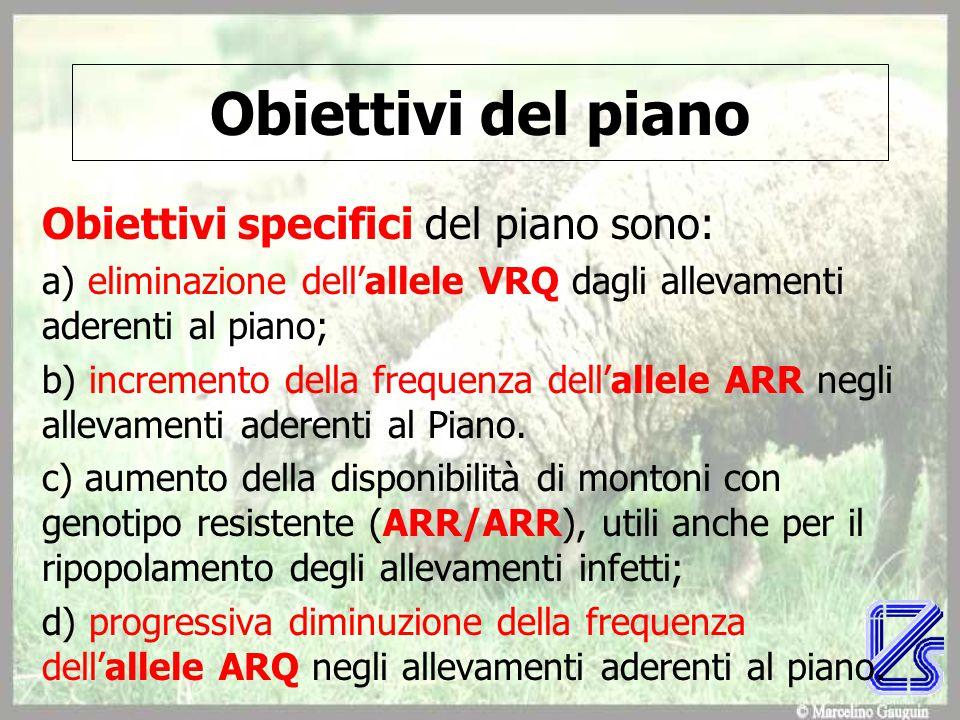 Obiettivi del piano Obiettivi specifici del piano sono: a) eliminazione dell'allele VRQ dagli allevamenti aderenti al piano; b) incremento della frequenza dell'allele ARR negli allevamenti aderenti al Piano.