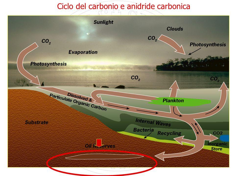 17 Ciclo del carbonio e anidride carbonica