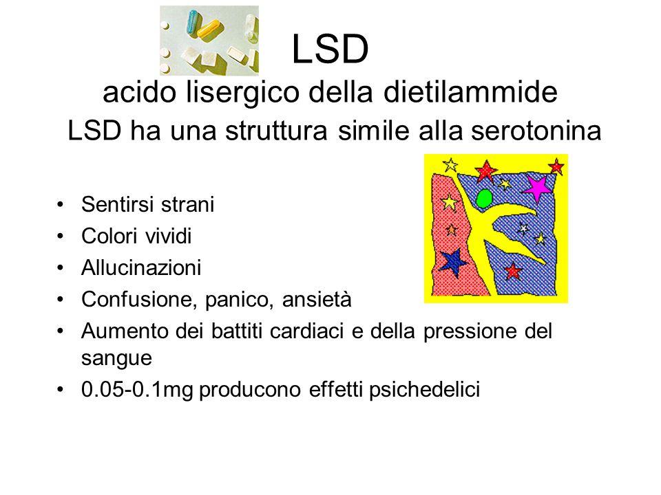 LSD acido lisergico della dietilammide LSD ha una struttura simile alla serotonina Sentirsi strani Colori vividi Allucinazioni Confusione, panico, ans