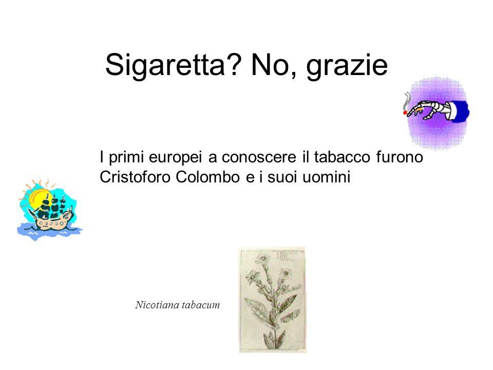 Sigaretta? No, grazie I primi europei a conoscere il tabacco furono Cristoforo Colombo e i suoi uomini Nicotiana tabacum
