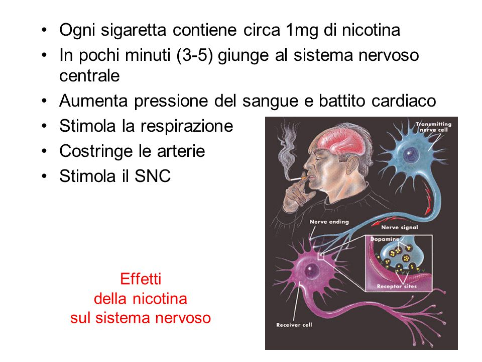 Effetti della nicotina sul sistema nervoso Ogni sigaretta contiene circa 1mg di nicotina In pochi minuti (3-5) giunge al sistema nervoso centrale Aume