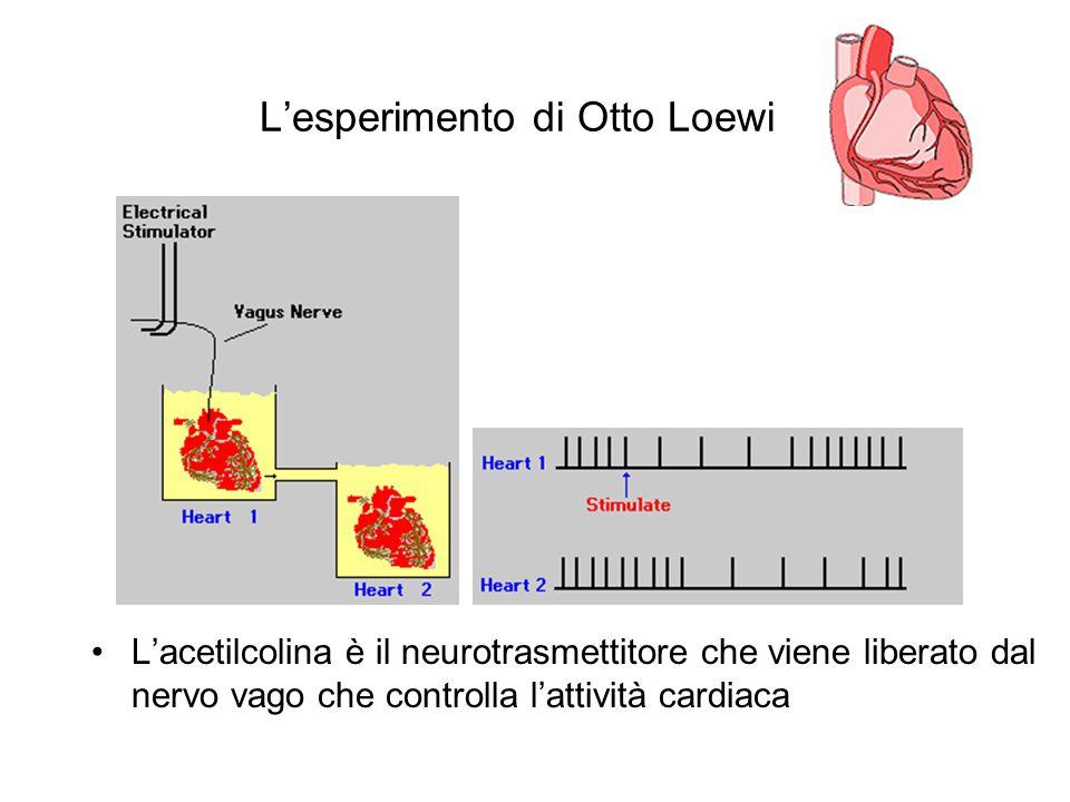 L'esperimento di Otto Loewi L'acetilcolina è il neurotrasmettitore che viene liberato dal nervo vago che controlla l'attività cardiaca
