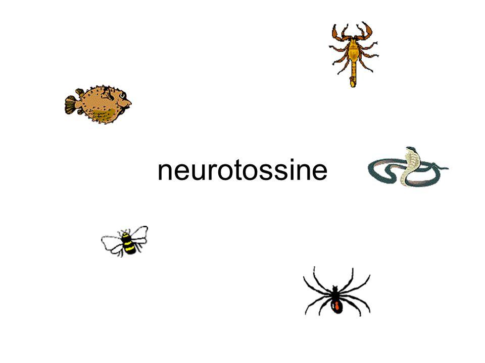  -bungarotossina serpente recettore acetilcolina (nicotinico) anatossinaalgaacetilcolinesterasi batracotossinarane assone (potenziale d'azione) Tossina botulinicabatteriblocca rilascio acetilcolina capsaicinapeperoncinoeccita le terminazioni nervose ciguatossinadinoflagellatiassone (potenziale d'azione) cobratossinacobrarecettore acetilcolina (nicotinico) conotossinaSerpente marinoAssone, sinapsi latrotossinaVedova neraAumenta rilascio acetilcolina maculotossinaoctopusassone