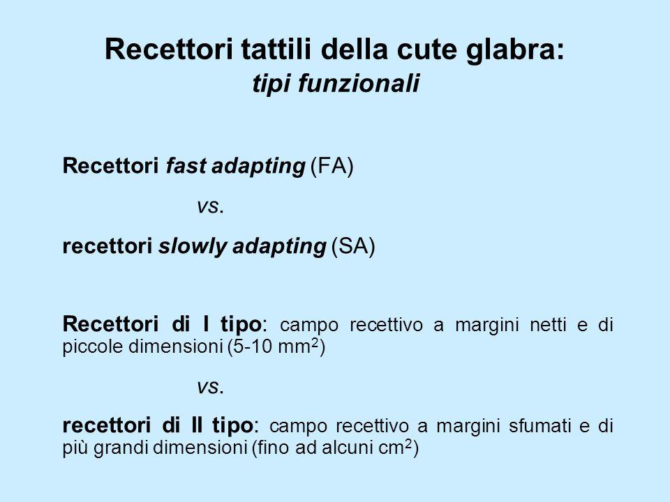 Recettori tattili della cute glabra: tipi funzionali Recettori fast adapting (FA) vs.