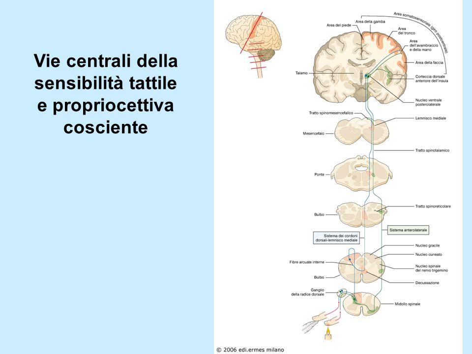 Vie centrali della sensibilità tattile e propriocettiva cosciente