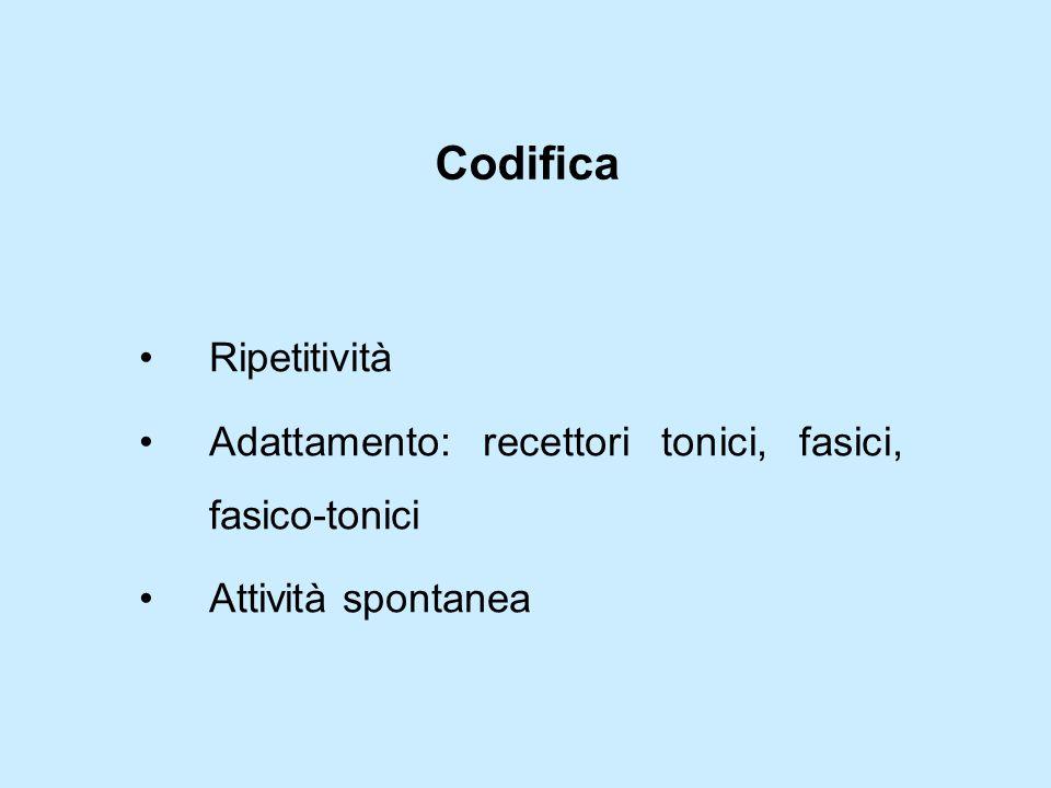 Codifica Ripetitività Adattamento: recettori tonici, fasici, fasico-tonici Attività spontanea