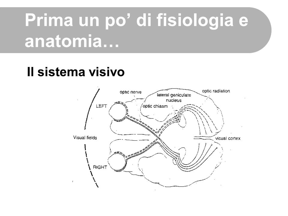 Prima un po' di fisiologia e anatomia… Il sistema visivo
