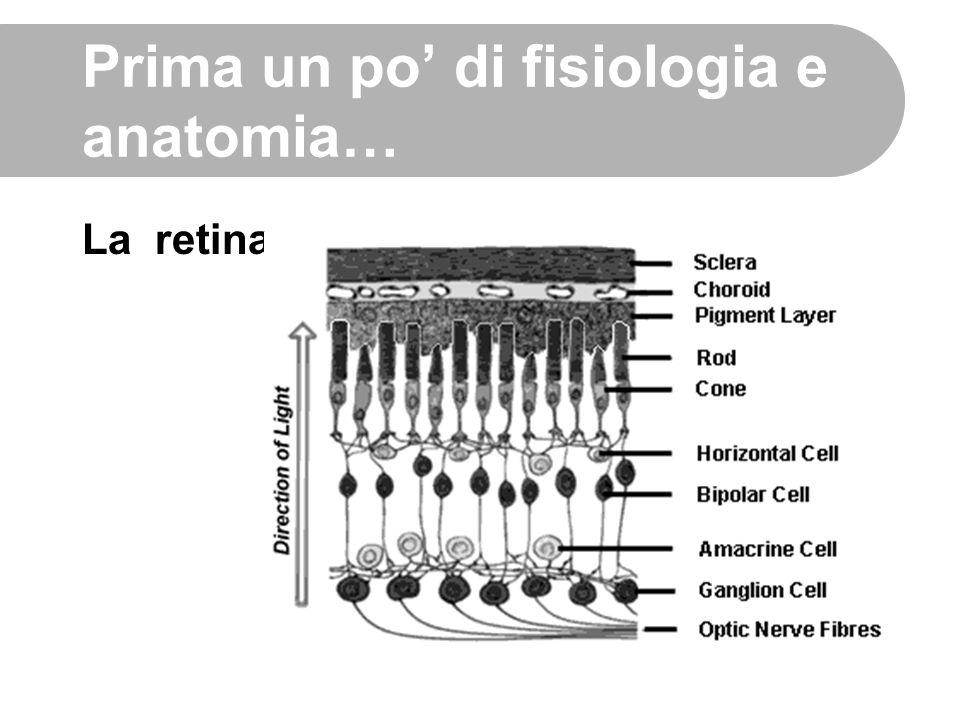 Prima un po' di fisiologia e anatomia… La retina
