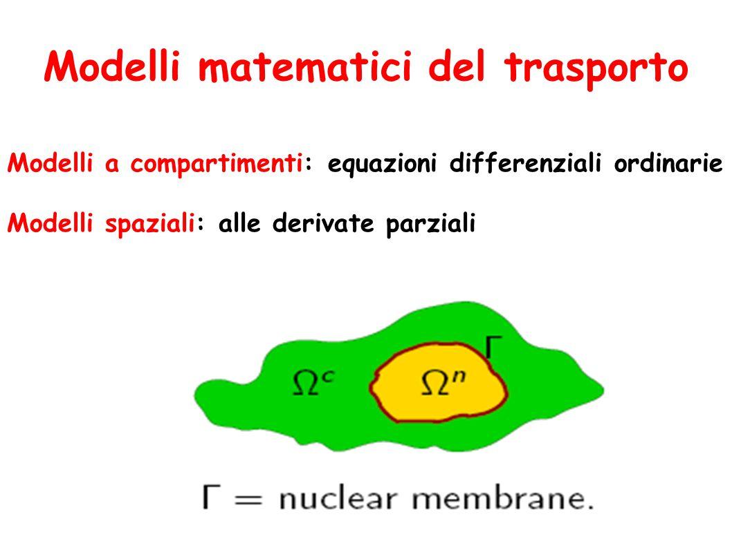 Modelli matematici del trasporto Modelli a compartimenti: equazioni differenziali ordinarie Modelli spaziali: alle derivate parziali