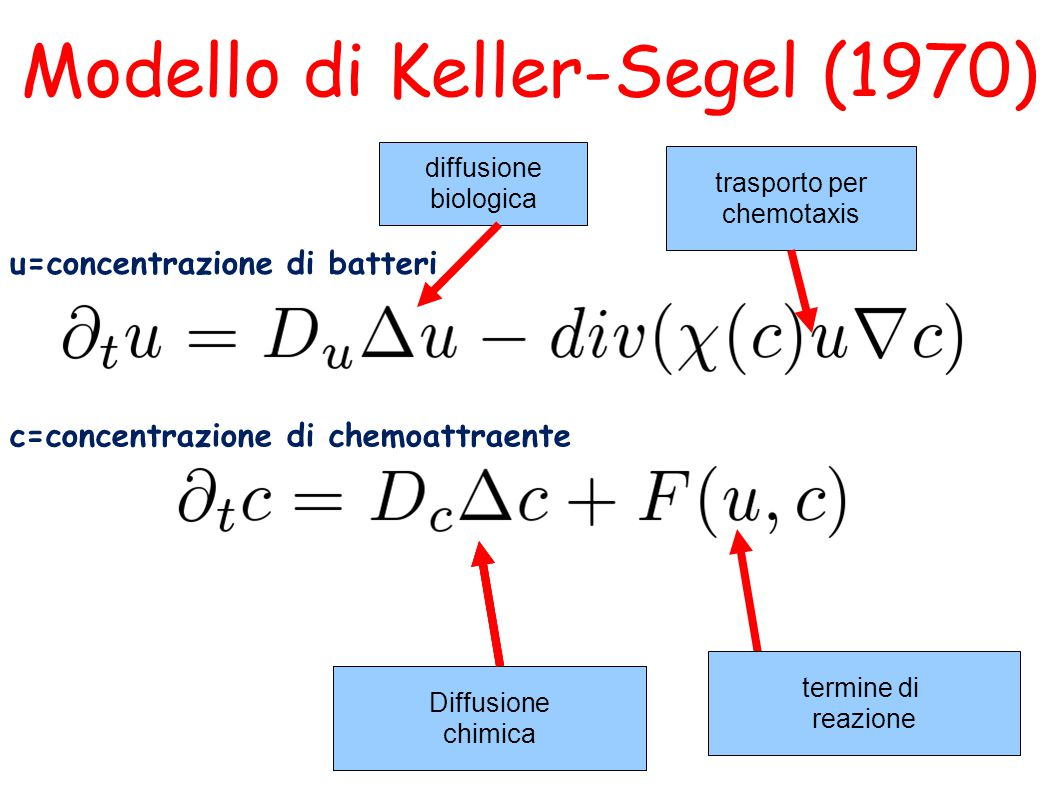diffusione biologica Modello di Keller-Segel (1970) Diffusione chimica trasporto per chemotaxis u=concentrazione di batteri c=concentrazione di chemoattraente Diffusione chimica Diffusione chimica termine di reazione