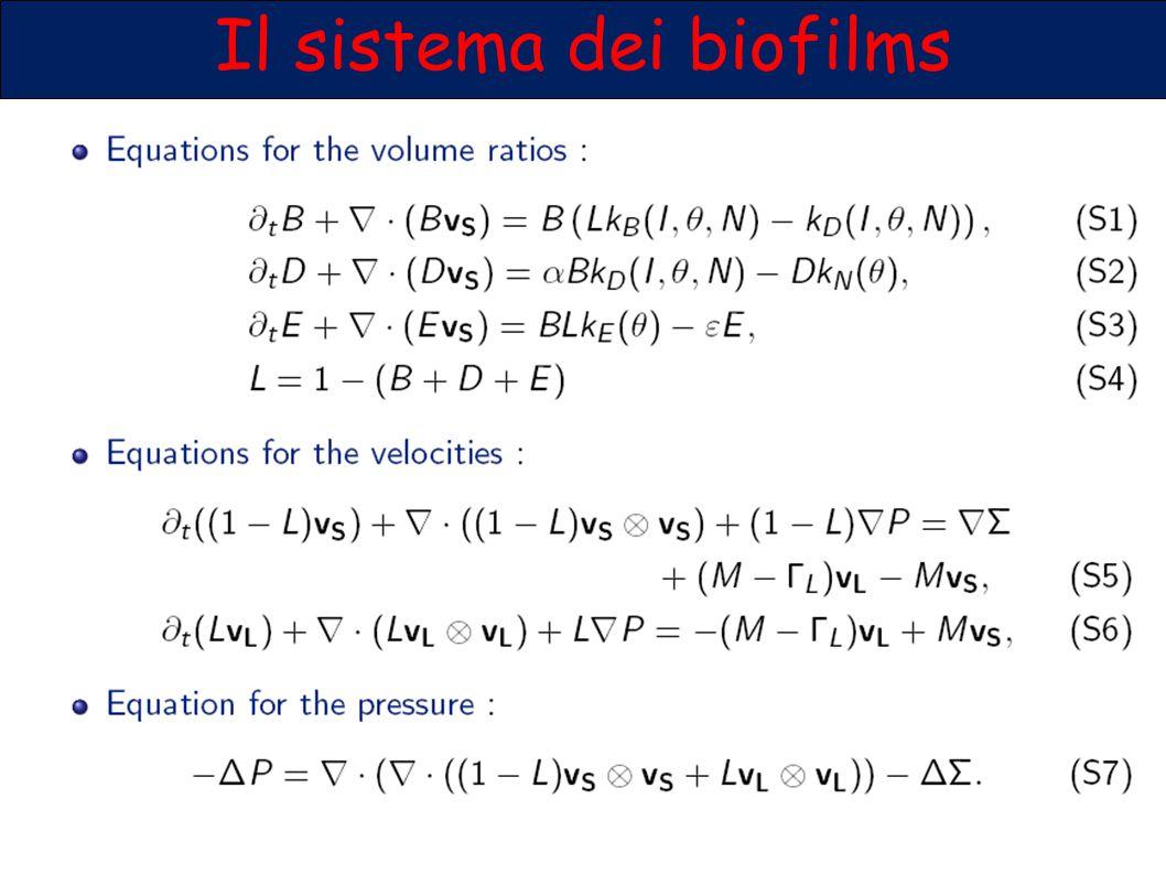Il sistema dei biofilms