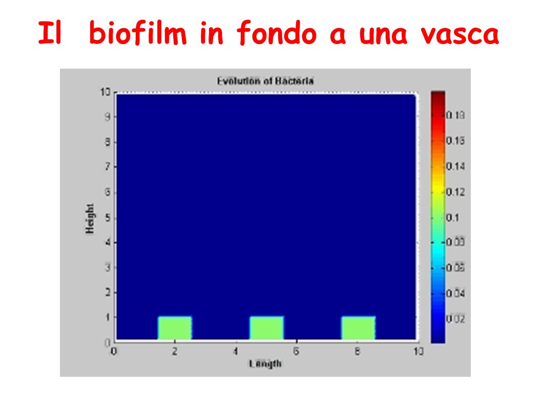 Il biofilm in fondo a una vasca
