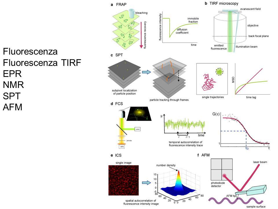 Fluorescenza Fluorescenza TIRF EPR NMR SPT AFM