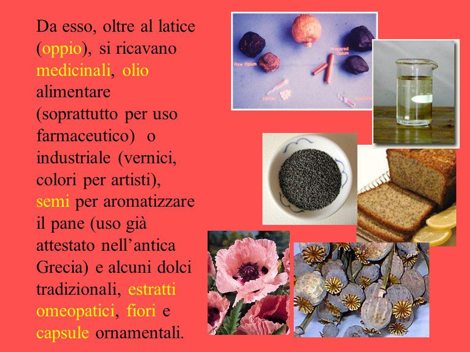 Da esso, oltre al latice (oppio), si ricavano medicinali, olio alimentare (soprattutto per uso farmaceutico) o industriale (vernici, colori per artist