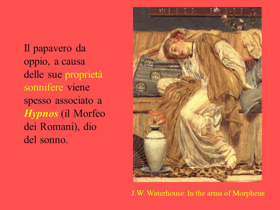 J.W. Waterhouse: In the arms of Morpheus Il papavero da oppio, a causa delle sue proprietà sonnifere viene spesso associato a Hypnos (il Morfeo dei Ro