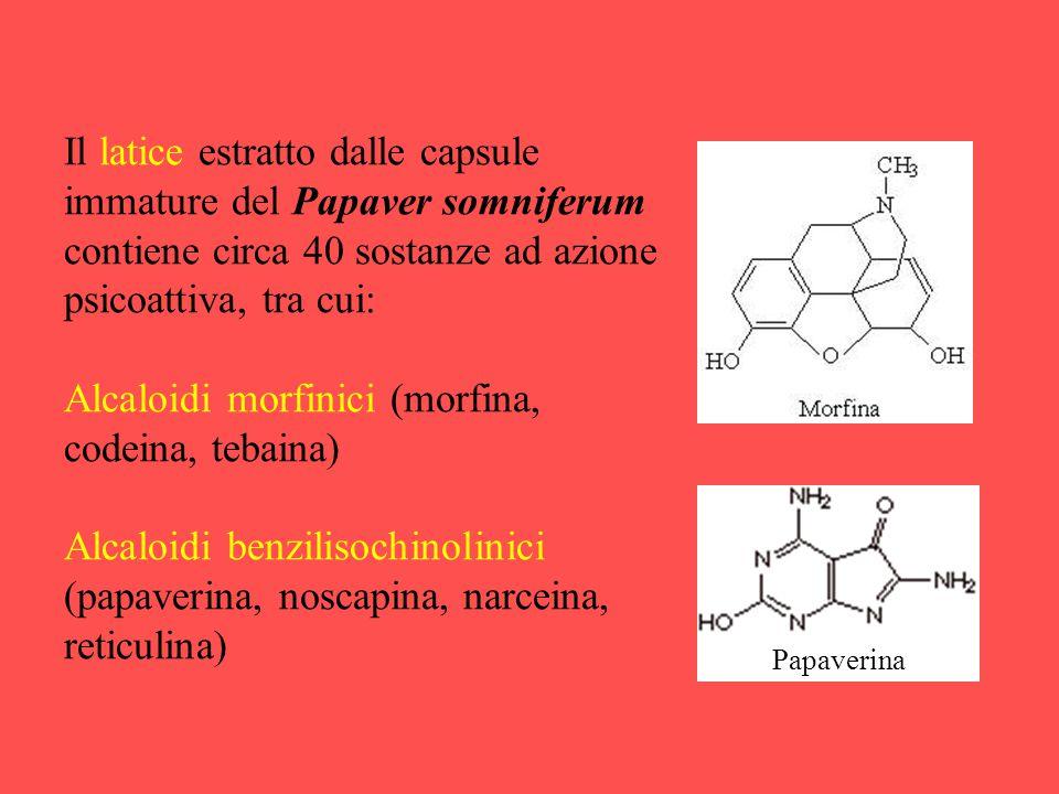 Il latice estratto dalle capsule immature del Papaver somniferum contiene circa 40 sostanze ad azione psicoattiva, tra cui: Alcaloidi morfinici (morfi