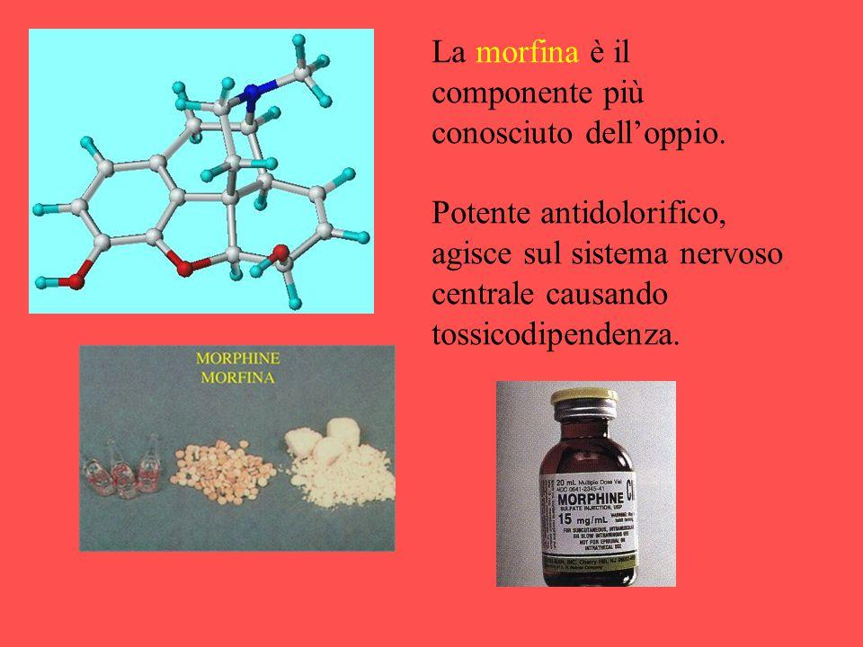 La morfina è il componente più conosciuto dell'oppio. Potente antidolorifico, agisce sul sistema nervoso centrale causando tossicodipendenza.