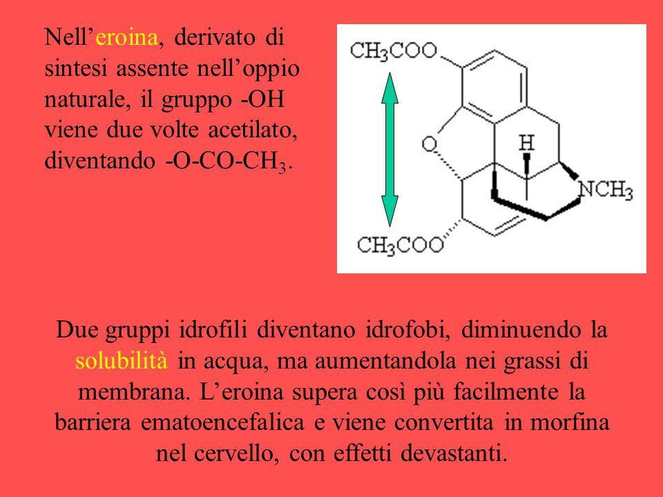 Nell'eroina, derivato di sintesi assente nell'oppio naturale, il gruppo -OH viene due volte acetilato, diventando -O-CO-CH 3. Due gruppi idrofili dive
