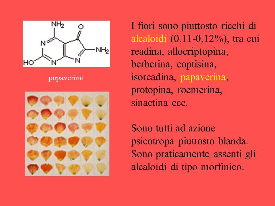 I fiori sono piuttosto ricchi di alcaloidi (0,11-0,12%), tra cui readina, allocriptopina, berberina, coptisina, isoreadina, papaverina, protopina, roe