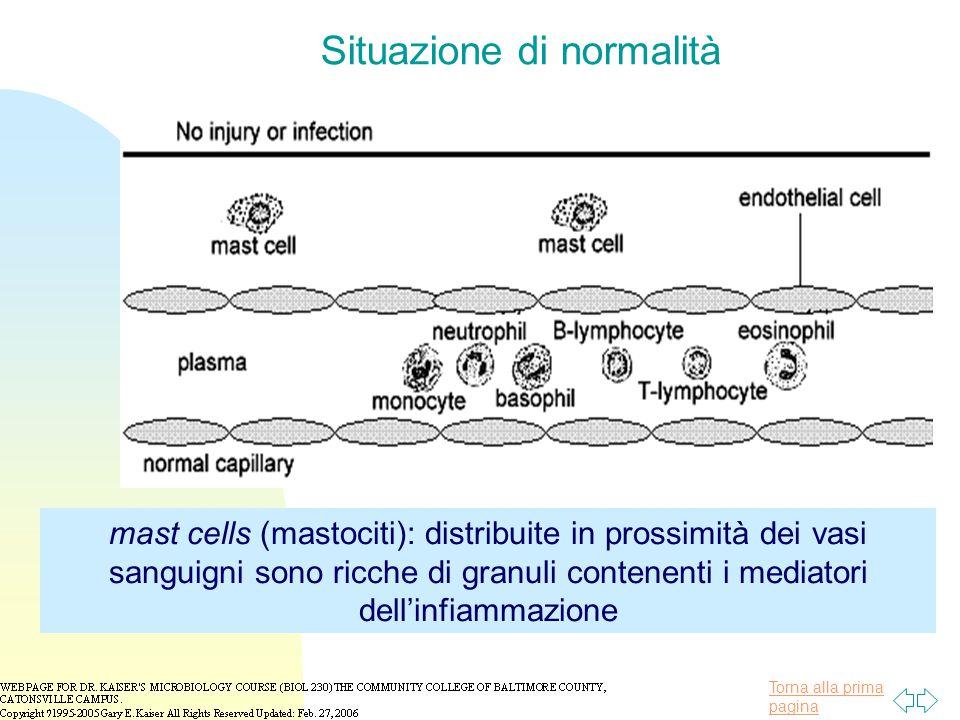 Torna alla prima pagina Situazione di normalità mast cells (mastociti): distribuite in prossimità dei vasi sanguigni sono ricche di granuli contenenti