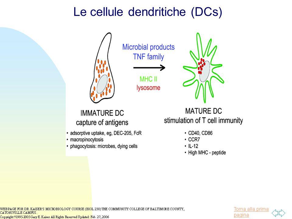 Torna alla prima pagina Le cellule dendritiche (DCs)