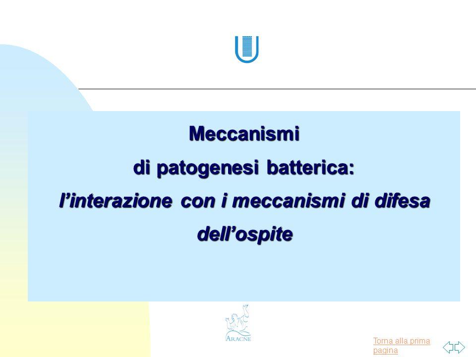 Torna alla prima pagina Meccanismi di patogenesi batterica: l'interazione con i meccanismi di difesa dell'ospite