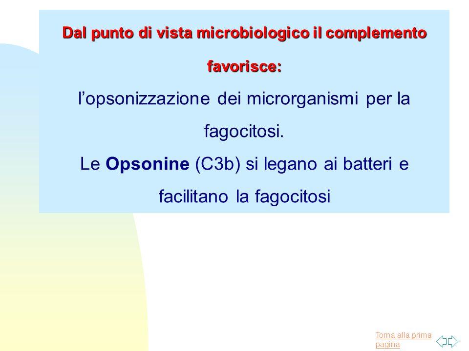 Torna alla prima pagina Dal punto di vista microbiologico il complemento favorisce: l'opsonizzazione dei microrganismi per la fagocitosi. Le Opsonine