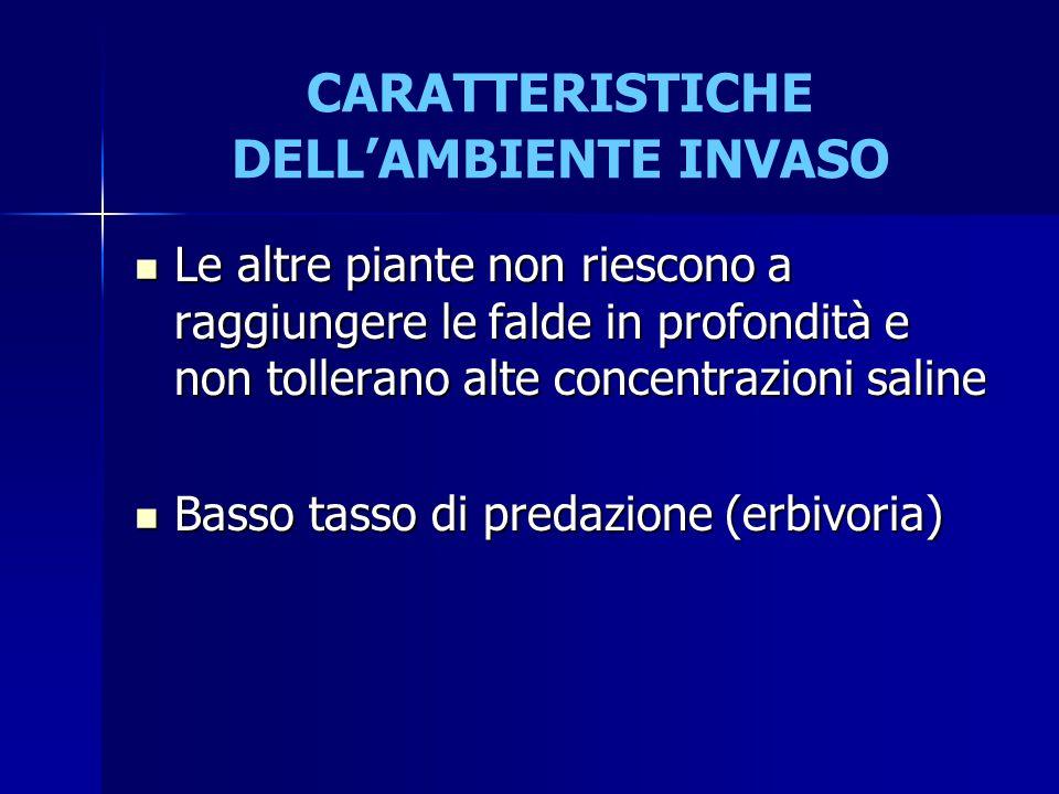 CARATTERISTICHE DELL'AMBIENTE INVASO Le altre piante non riescono a raggiungere le falde in profondità e non tollerano alte concentrazioni saline Le a