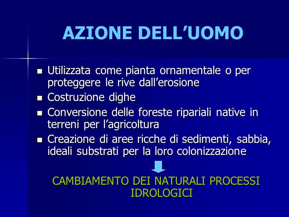 AZIONE DELL'UOMO Utilizzata come pianta ornamentale o per proteggere le rive dall'erosione Utilizzata come pianta ornamentale o per proteggere le rive