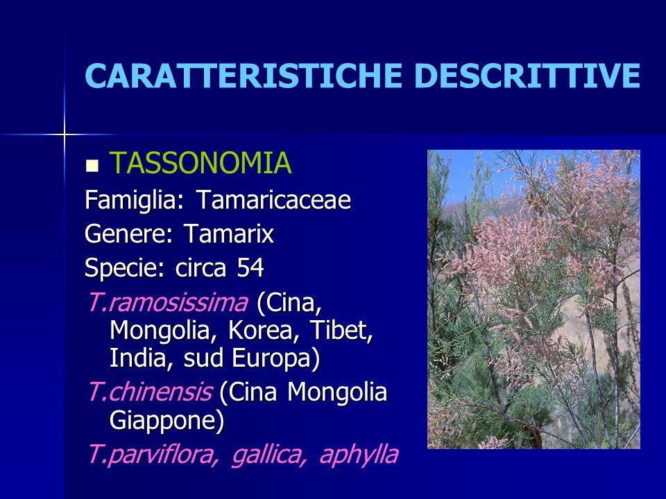 CARATTERISTICHE DESCRITTIVE TASSONOMIA Famiglia: Tamaricaceae Genere: Tamarix Specie: circa 54 (Cina, Mongolia, Korea, Tibet, India, sud Europa) T.ram
