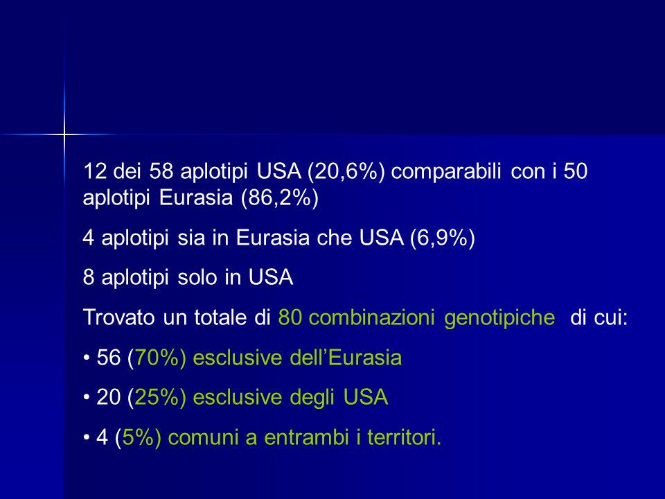 12 dei 58 aplotipi USA (20,6%) comparabili con i 50 aplotipi Eurasia (86,2%) 4 aplotipi sia in Eurasia che USA (6,9%) 8 aplotipi solo in USA Trovato u