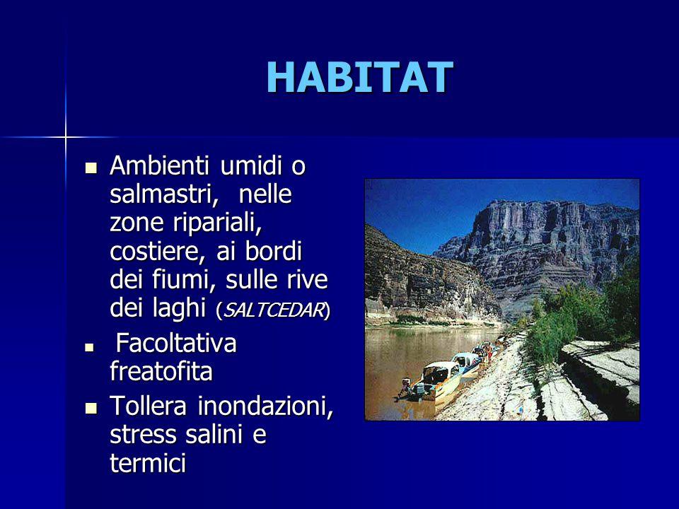 Ambienti umidi o salmastri, nelle zone ripariali, costiere, ai bordi dei fiumi, sulle rive dei laghi (SALTCEDAR) Ambienti umidi o salmastri, nelle zon