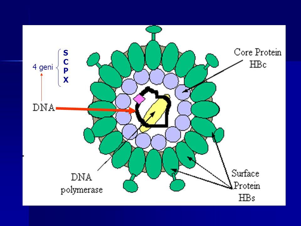 4 geni SCPXSCPX