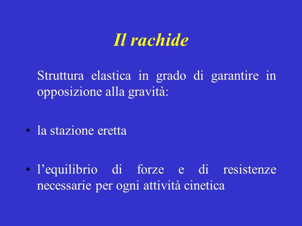 Il rachide Struttura elastica in grado di garantire in opposizione alla gravità: la stazione eretta l'equilibrio di forze e di resistenze necessarie p