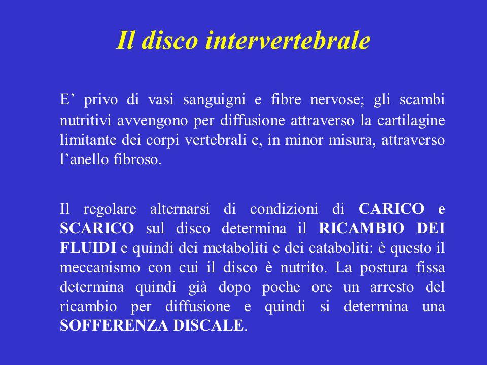 Il disco intervertebrale E' privo di vasi sanguigni e fibre nervose; gli scambi nutritivi avvengono per diffusione attraverso la cartilagine limitante