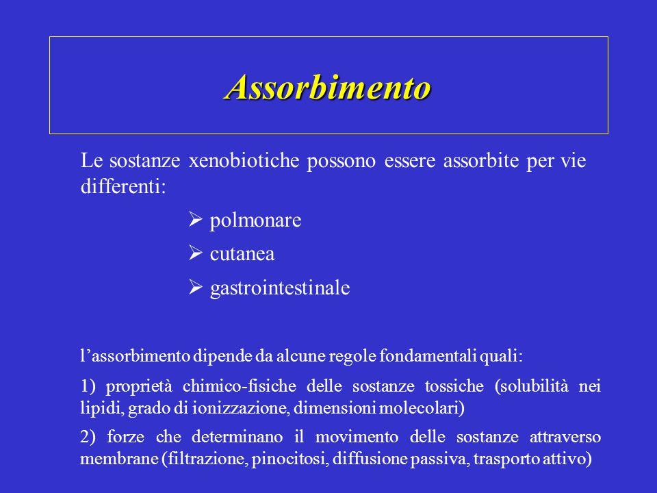 Assorbimento Le sostanze xenobiotiche possono essere assorbite per vie differenti:  polmonare  cutanea  gastrointestinale l'assorbimento dipende da