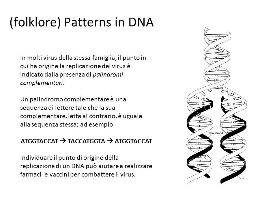 In molti virus della stessa famiglia, il punto in cui ha origine la replicazione del virus è indicato dalla presenza di palindromi complementari.