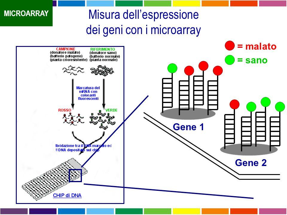 Misura dell'espressione dei geni con i microarray Gene 1 Gene 2 = malato = sano MICROARRAY