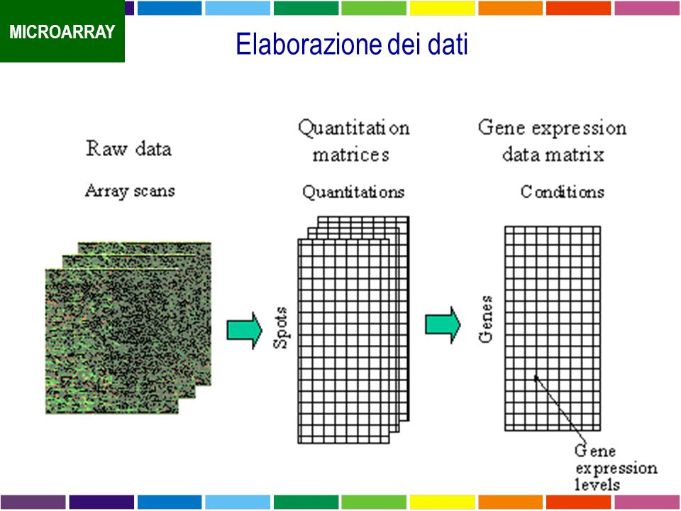 Elaborazione dei dati MICROARRAY