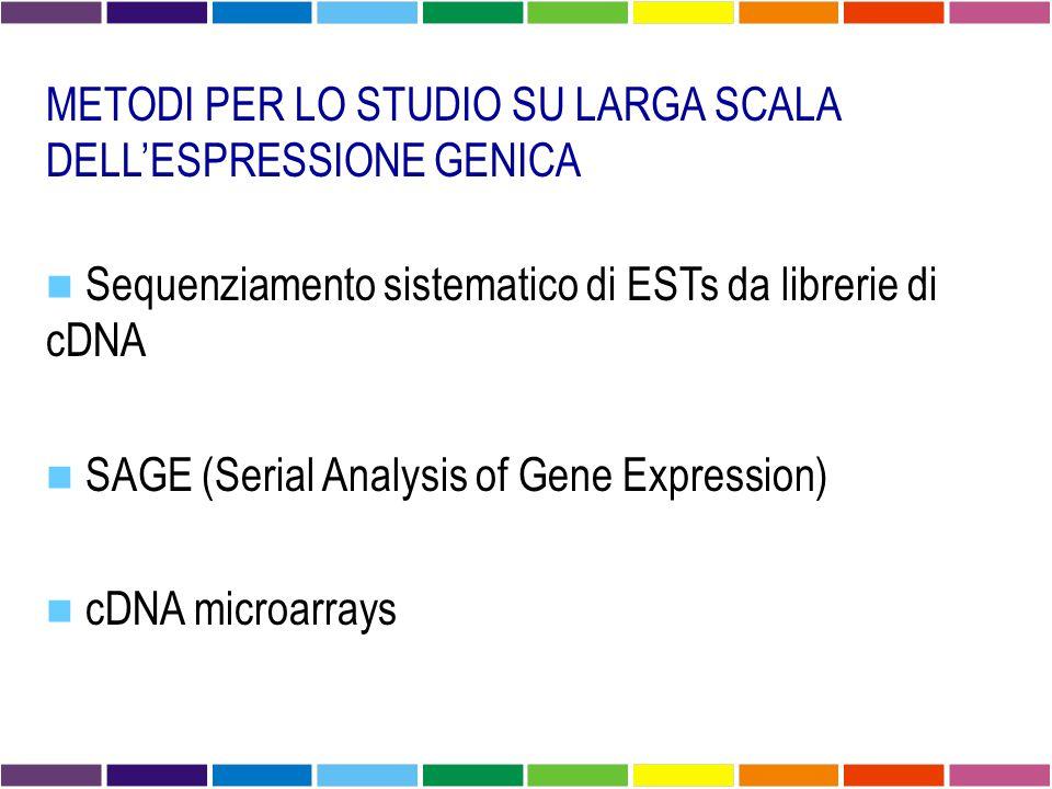 METODI PER LO STUDIO SU LARGA SCALA DELL'ESPRESSIONE GENICA Sequenziamento sistematico di ESTs da librerie di cDNA SAGE (Serial Analysis of Gene Expression) cDNA microarrays